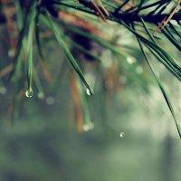 Слезы природы :: Ксения Пискунова