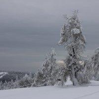 Снежный дракон :: Лариса Сигова