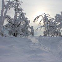 Морозный закат :: Лариса Сигова