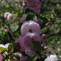 весенний цвет :: Екатерина Юрова