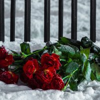 Розы :: Александр Неустроев