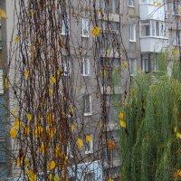 Осень...(2) :: Игорь Липинский