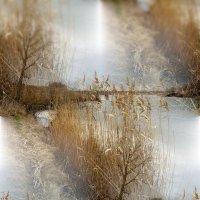 Сны о весне :: Мария Богуславская