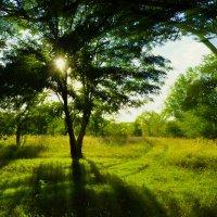 Утро в лесо :: Иван Коваленко