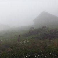 В тумане :: Виктория Иванова