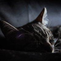 котик спит :: Наталия Квас