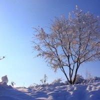 Согрей меня,- прошептало дерево :: Mariam Simonyan