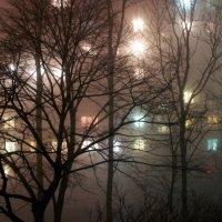 Туманный февральский вечер :: Тая Лемур