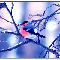 Снегирь :: Фотостудия Объективность
