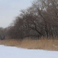 зима :: Наташа Шамаева