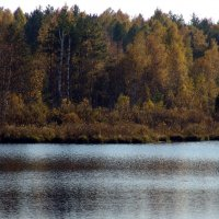 Осенний лес :: Александр Ефанов