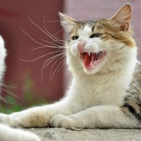 маленькие кошки тоже чувствуют себя тиграми. :: Anna Volkova