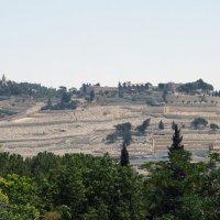 Израиль маслиничная гора :: Валерий Баранчиков