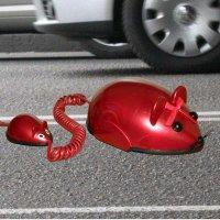 телефон мышки :: romadrom Романов