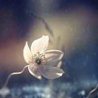 ..грустная рапсодия дождя.... :: Галина Юняева