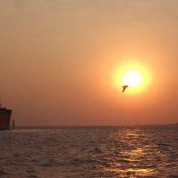 закат в Аравийском море. :: maikl falkon