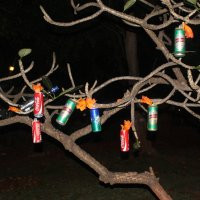 бутылочное дерево :: maikl falkon