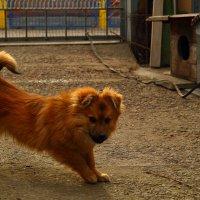 Собака+1 :: Роман