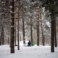 Лесные посиделки :: Олег Бондаренко