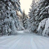 Зимняя дорога :: Анжела Пасечник