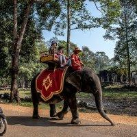 Слон и мотоцикл. :: mikhail grunenkov