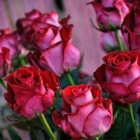 роза :: Владимир Юминов