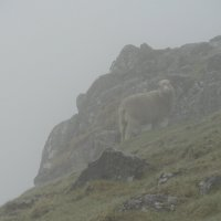 Баран в тумане :: Александр Павленко