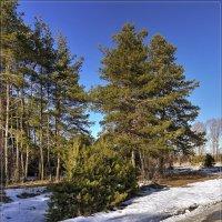 Последний день зимы :: Андрей Дворников