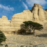 Крепость в вади Зоар. Израиль :: Lmark
