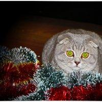 День кошек. Праздник по-женски... :: Ольга Ламзина