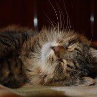 Спят усталые котята... (часть 1) :: Константин Жирнов