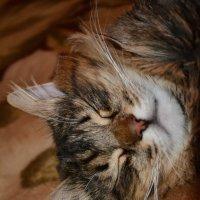 Спят усталые котята... (часть 2) :: Константин Жирнов