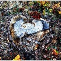 Разбитое сердце :: Татьяна Губина