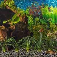 Зеленый аквариум :: Андрей Качин