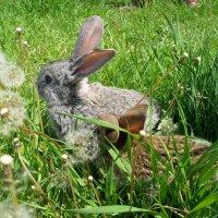 кролики :: Галина Pavel