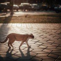 1 марта - всемирный день кошек! :: Сергей Пилтник