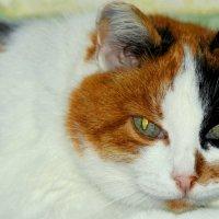 Моя Китя! :: Владимир Шошин