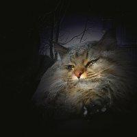 Ночной дозор :: Olenka