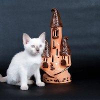 Фотосессия ко дню кошек :: Александр Игоревич