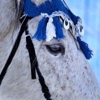 Ярмарочный конь 2 :: Татьяна