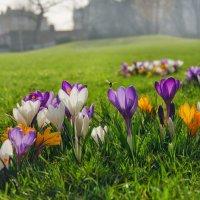 Весна пришла! :: Boris Alabugin