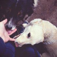 Любовь к ним бесконечна :: Валерия Сивел