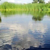 Река :: Ольга Кривых