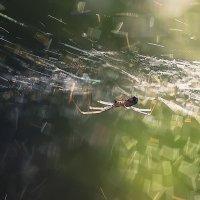 ..в брызгах солнца... :: Галина Юняева