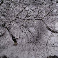 нежданный снегопад :: Катерина Коленицкая
