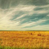 Haystacks, (Midday) :: Evgeniy Grishin