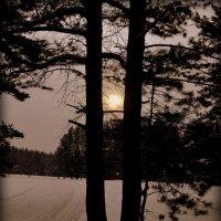 Лыжня. :: Лариса Красноперова