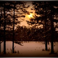 Зимний лес. :: Лариса Красноперова