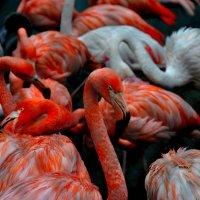 Фламинго 2 :: Иван Косачев