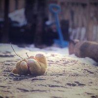 мишку бросила хозяйка...... :: Михаил Кузнецов